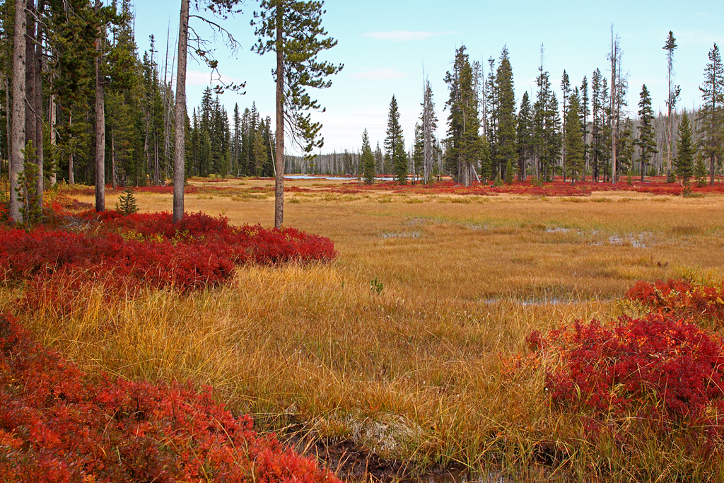 autumn colors in Yellowstone